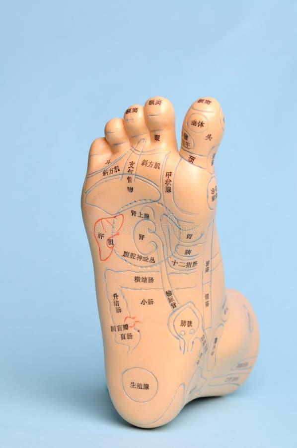 Modelo da massagem do pé imagem de stock