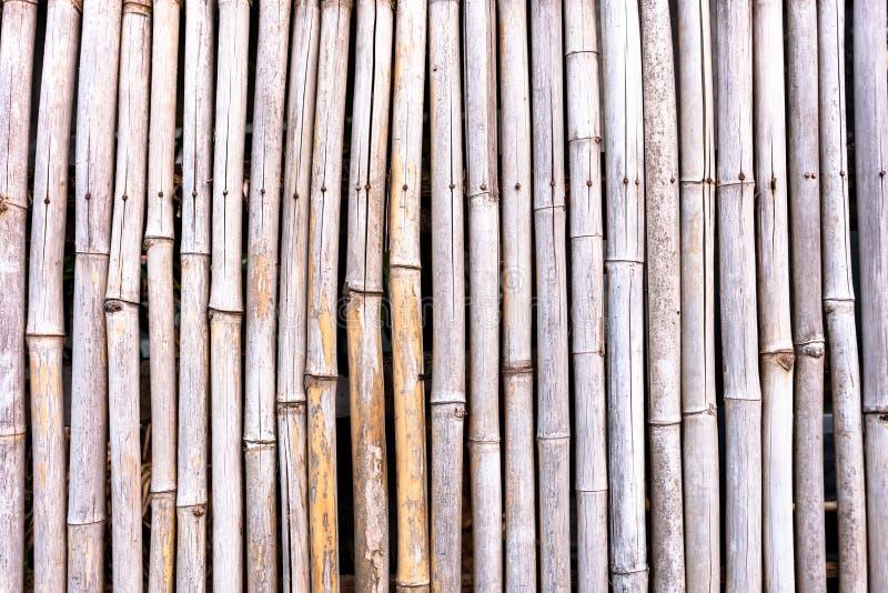 Modelo de bambú rayado en fondo de la textura de la fila imagen de archivo libre de regalías