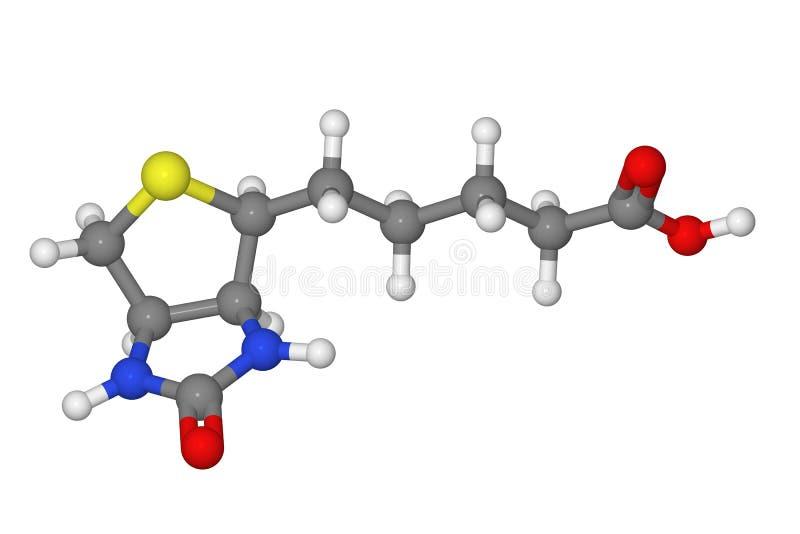 Modelo de bola y de palillo de la molécula de la biotina ilustración del vector