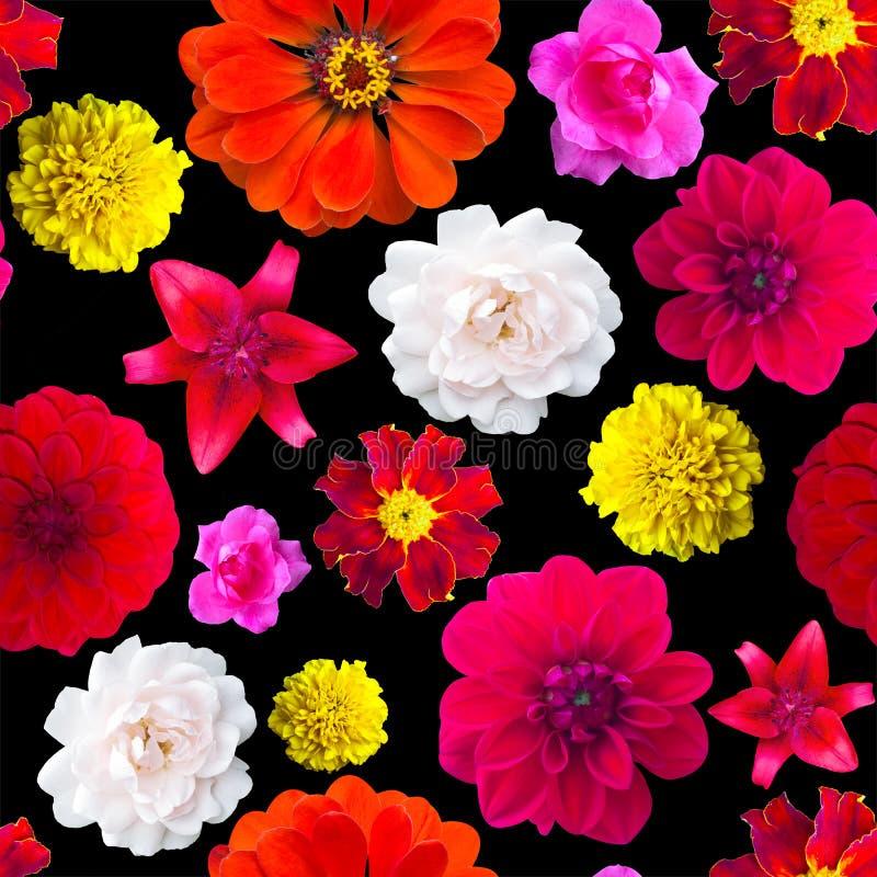 Modelo de flores del jardín inconsútil Textura de la flor maravilla, Dahli fotografía de archivo