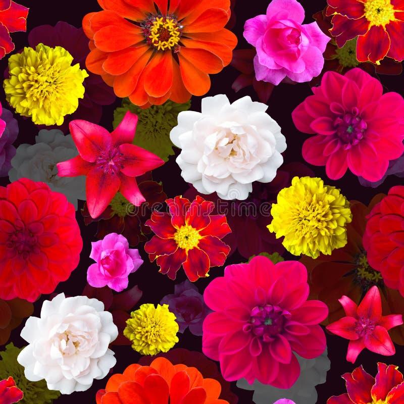 Modelo de flores del jardín inconsútil Textura de la flor maravilla, Dahli imagen de archivo