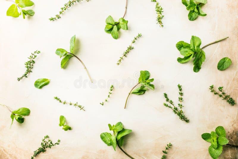 Modelo de hierbas verdes frescas imagen de archivo