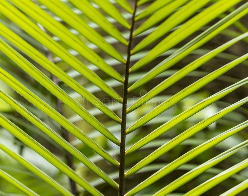 Modelo de hojas de palma en la selva en Dominica fotografía de archivo