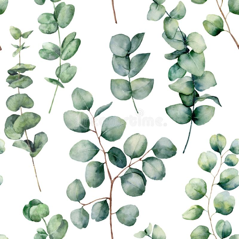 Modelo de la acuarela con las hojas redondas del eucalipto Rama del eucalipto del bebé pintado a mano y del dólar de plata aislad ilustración del vector