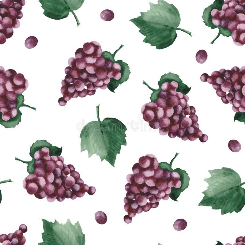 Modelo de la acuarela con las uvas y las hojas púrpuras de la uva libre illustration