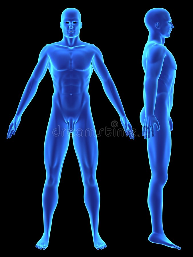 Modelo de la anatomía 3d stock de ilustración. Ilustración de ...
