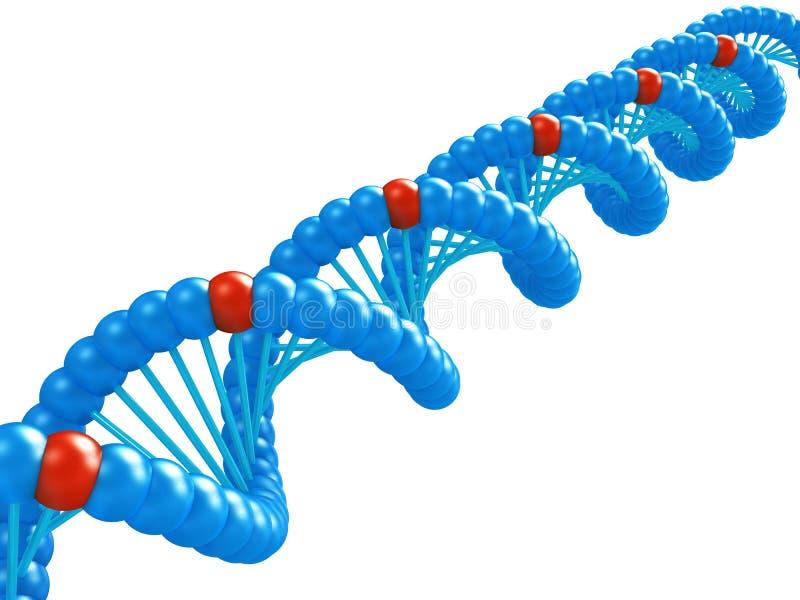 Modelo de la DNA. ilustración del vector