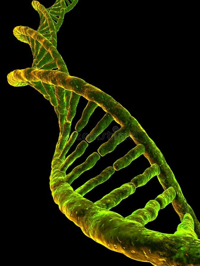 Modelo de la DNA ilustración del vector