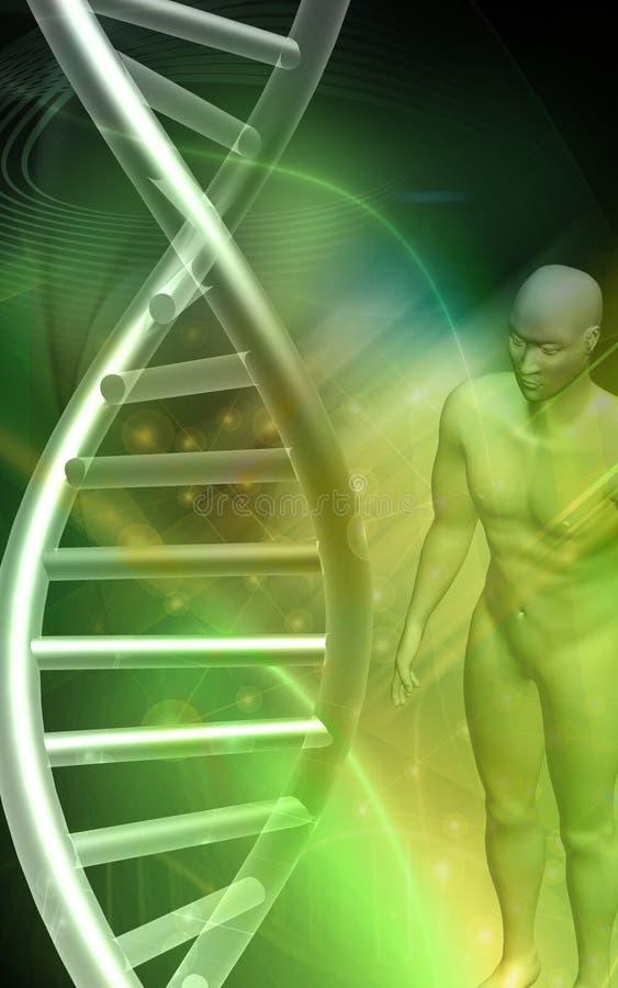 Modelo de la DNA y cuerpo humano en fondo verde libre illustration
