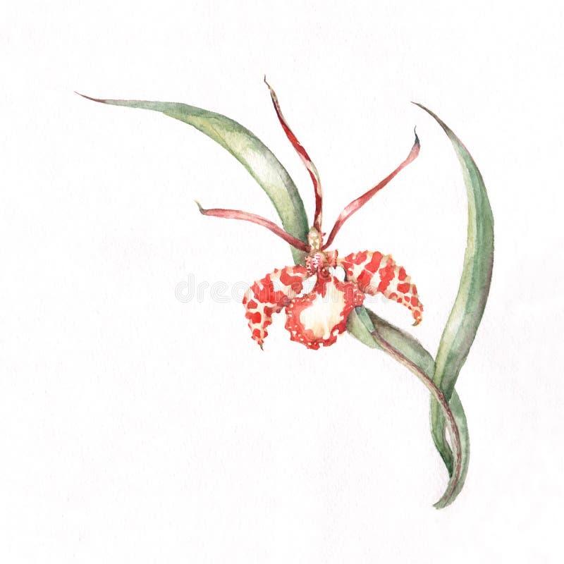 Modelo de la esquina de la orquídea ilustración del vector