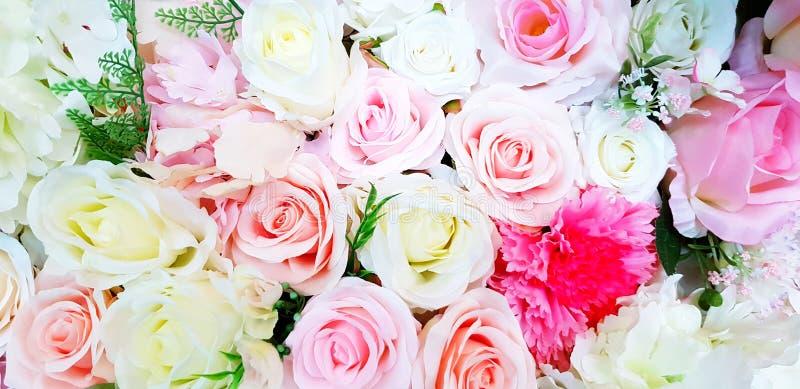 Modelo de la flor color de rosa hermosa del rosa, del rojo, amarilla y blanca del fondo fotos de archivo libres de regalías