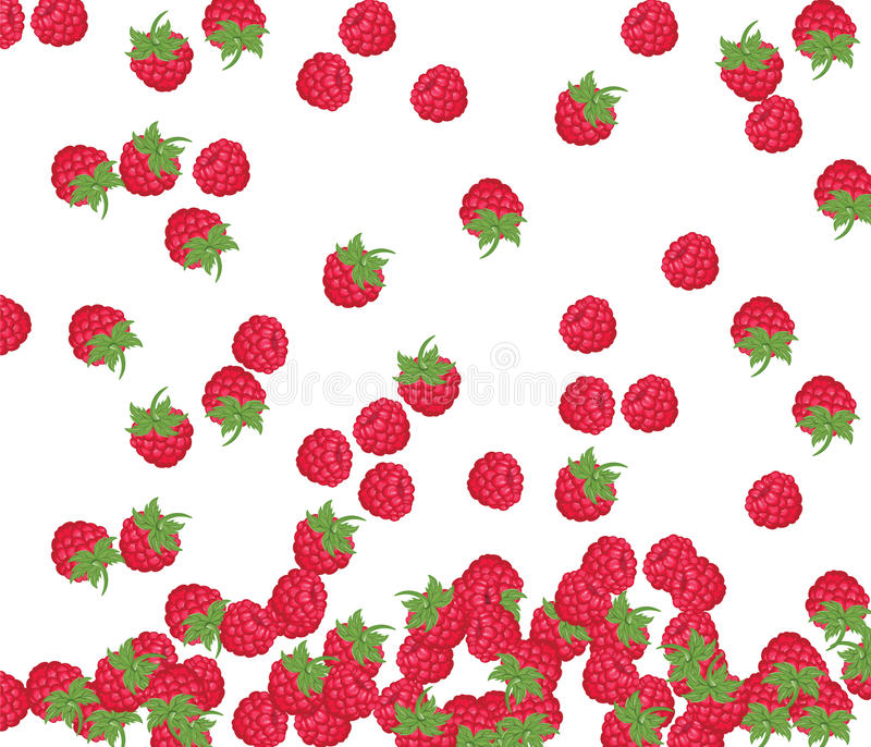 Modelo de la frambuesa roja libre illustration