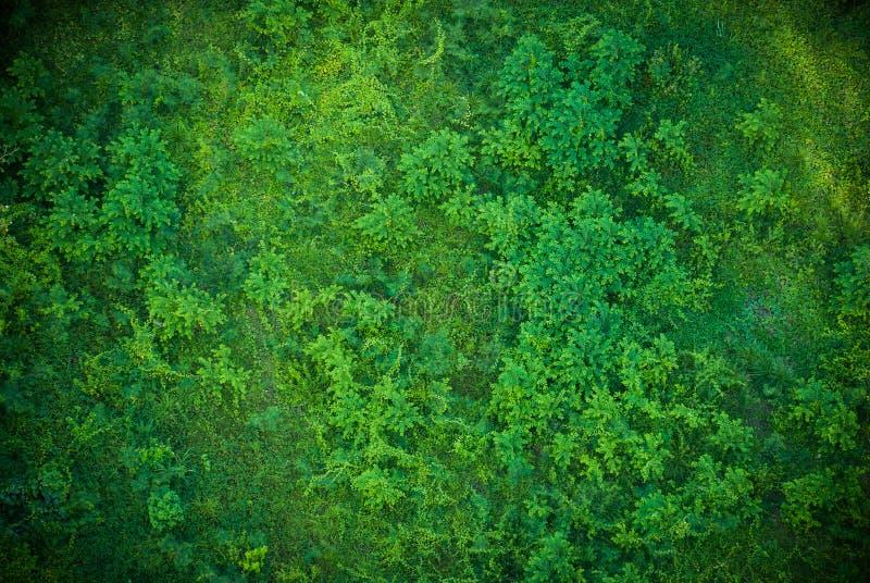 Modelo de la hierba verde foto de archivo