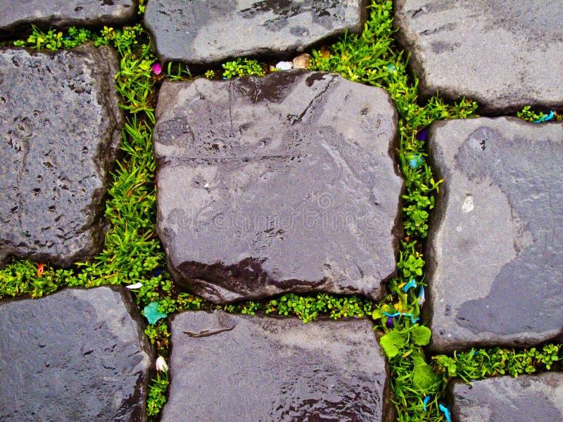 Modelo de la hierba y de la piedra fotografía de archivo