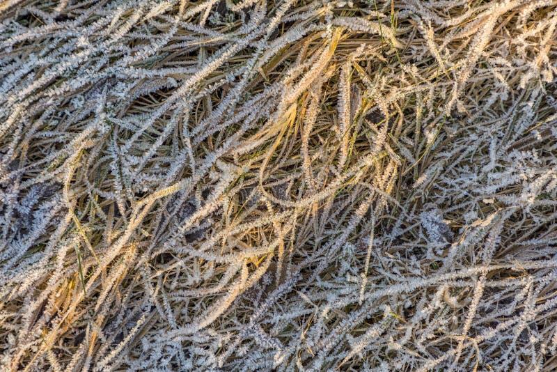 Modelo de la hierba y de las hojas congeladas en invierno imagenes de archivo