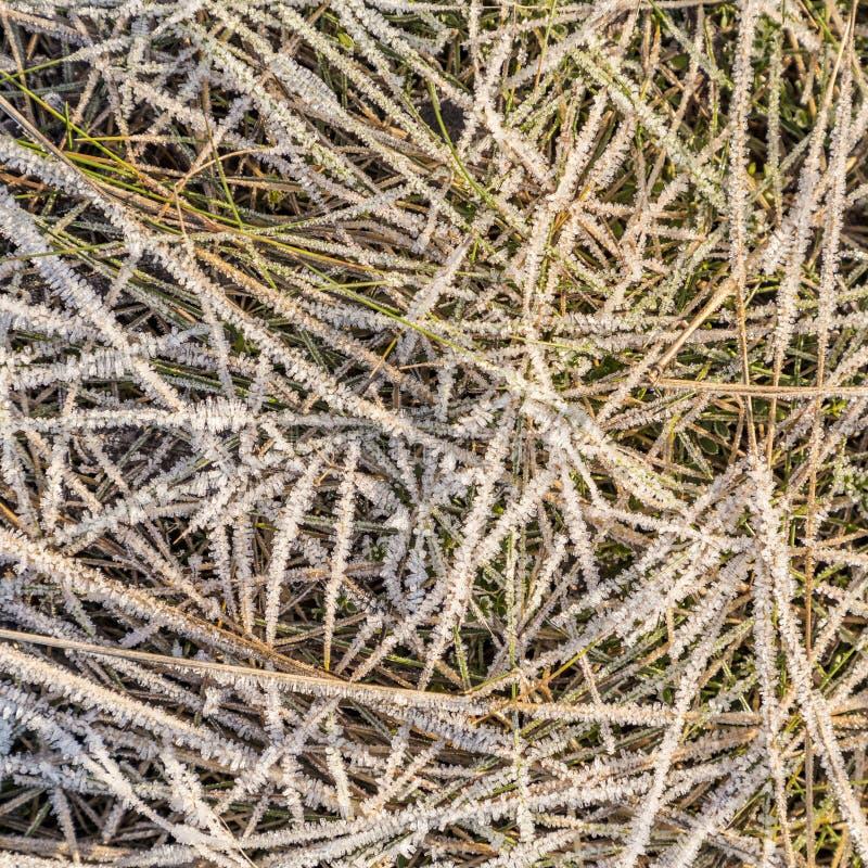 Modelo de la hierba y de las hojas congeladas en invierno foto de archivo