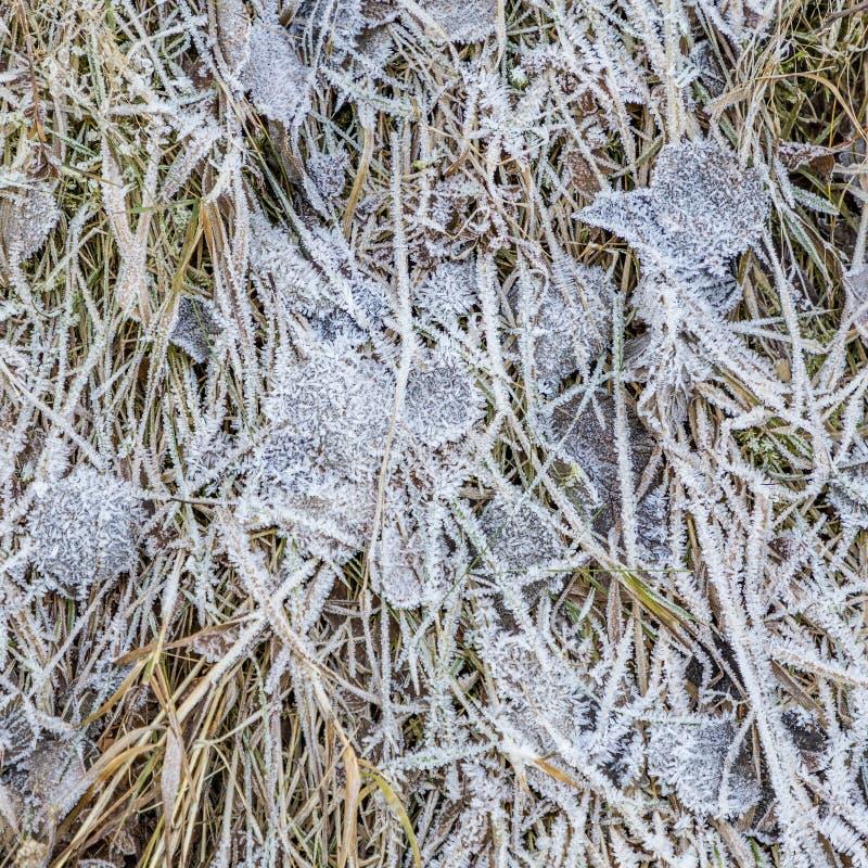 Modelo de la hierba y de las hojas congeladas en invierno fotos de archivo libres de regalías