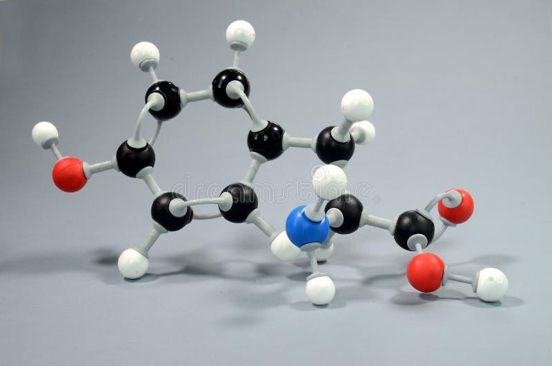 Modelo de la molécula 4 del hydroxyphenylalanine, un aminoácido común imagenes de archivo