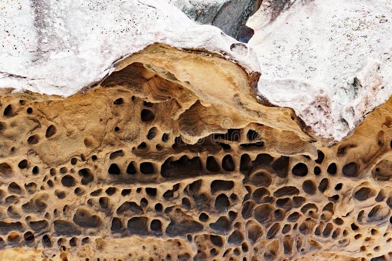 Modelo de la piedra arenisca del panal, playa del puerto de Sydney fotos de archivo