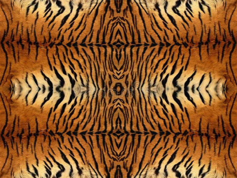 Modelo de la piel del tigre fotografía de archivo libre de regalías