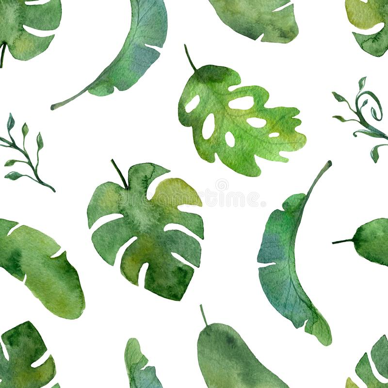 Modelo de la planta verde de la acuarela en un fondo blanco stock de ilustración