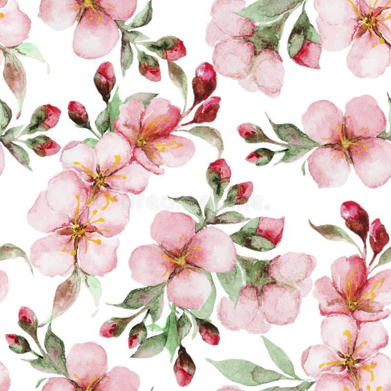 Modelo de las flores de Sakura de la acuarela foto de archivo