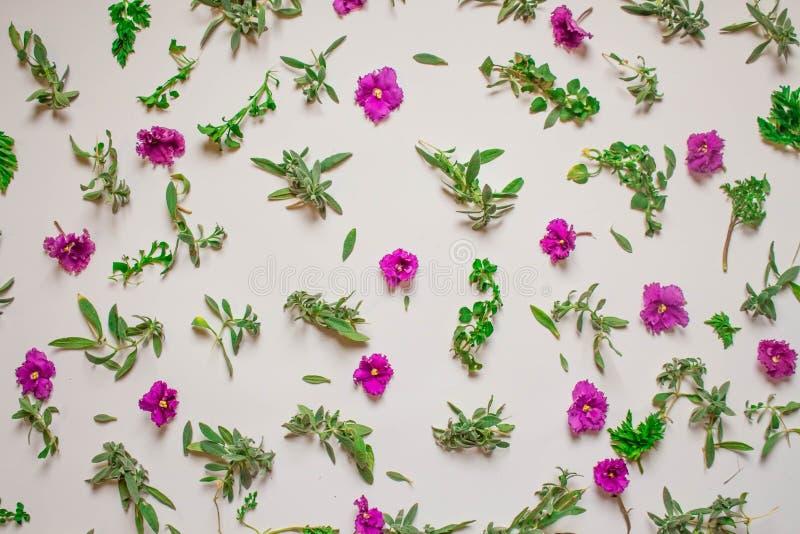 Modelo de las flores rosadas, p?talos, hojas en un fondo rosado Endecha plana, visi?n superior stock de ilustración
