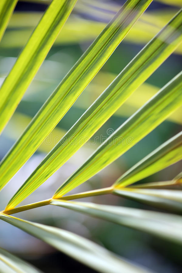 Modelo de las hojas de palma imagen de archivo libre de regalías