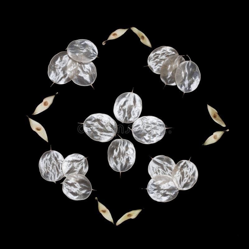 Modelo de las hojas inusuales con una extremidad aisladas en un fondo negro Textura de las hojas de plata Ecostyle, materiales na fotografía de archivo libre de regalías
