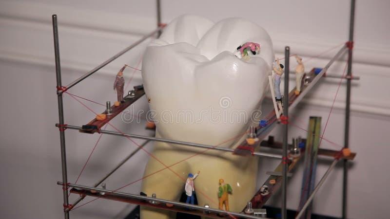 Modelo de los dientes almacen de video