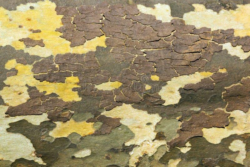 Modelo de madera de la textura de la corteza de árbol fotografía de archivo libre de regalías