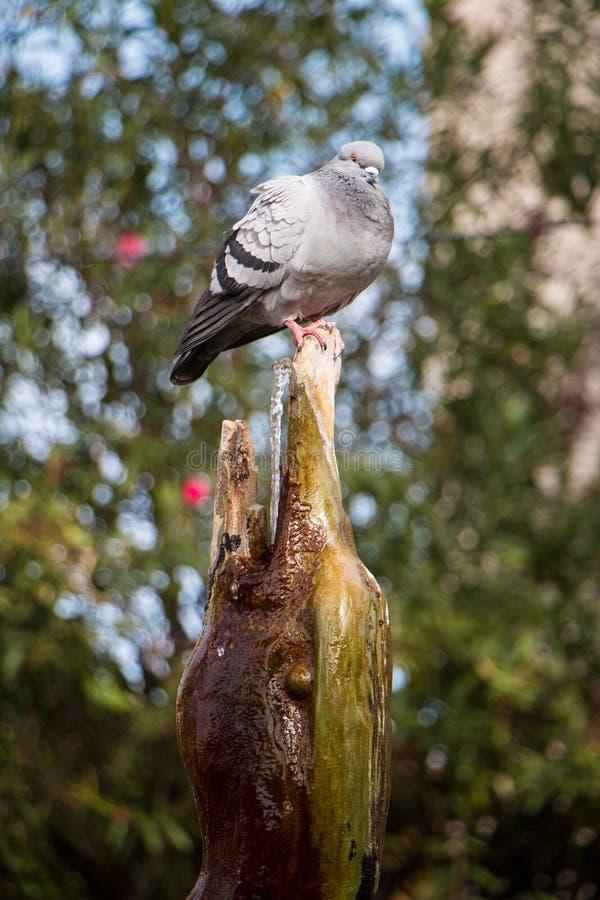 Modelo de moda bonito del pájaro fotos de archivo libres de regalías