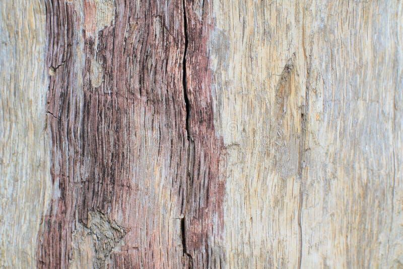 Modelo de textura original natural en la madera vieja dañada del álamo temblón en condiciones naturales outdoor imagen de archivo libre de regalías