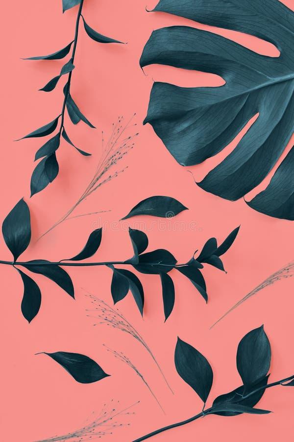 Modelo decorativo con las hojas imperecederas de la planta de Monstera en un fondo coralino vivo del color Visión superior imagen de archivo libre de regalías