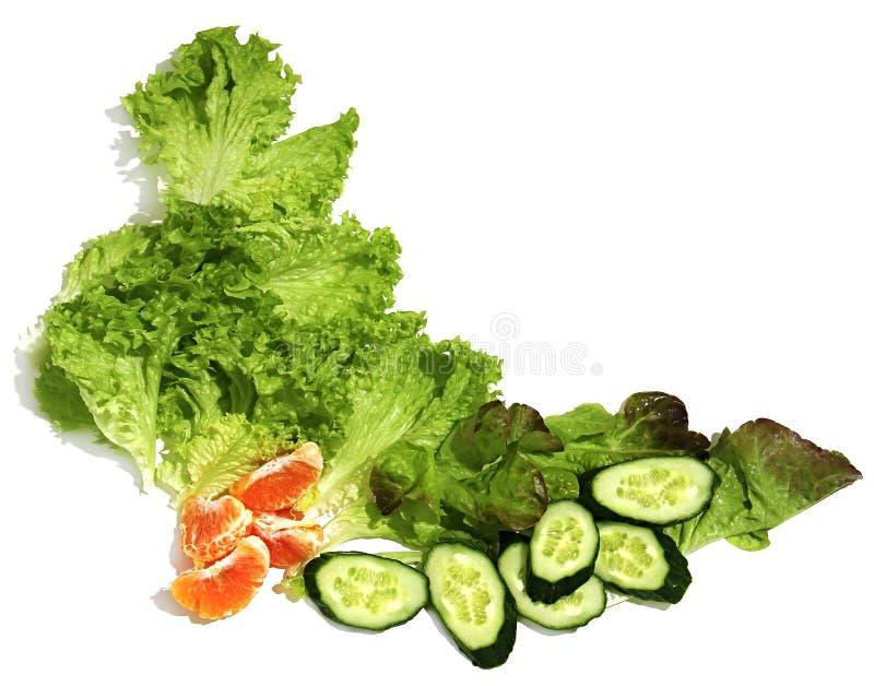 Modelo decorativo de verduras frescas en el fondo blanco imagen de archivo