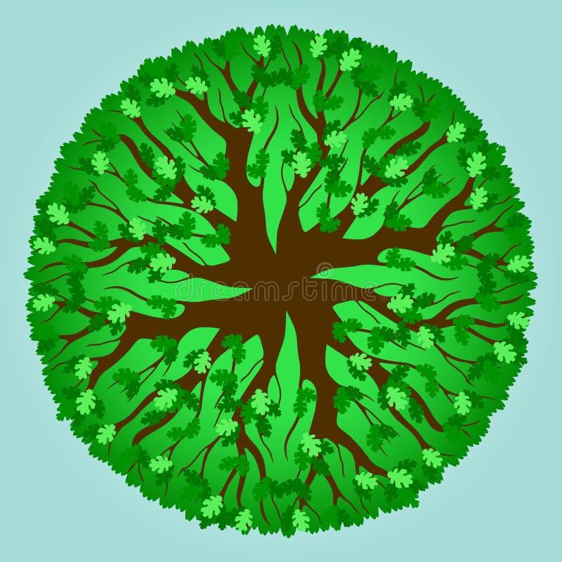 Modelo del árbol de roble - verano libre illustration