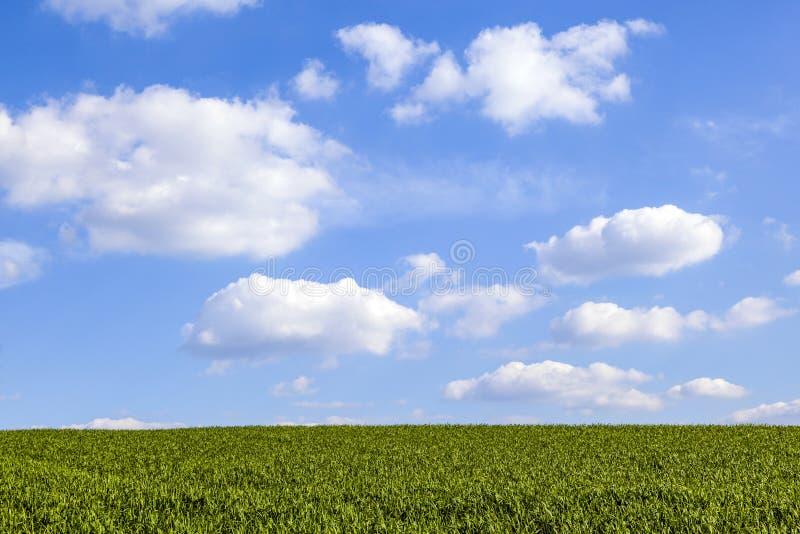 Modelo del campo verde con el azul fotografía de archivo libre de regalías