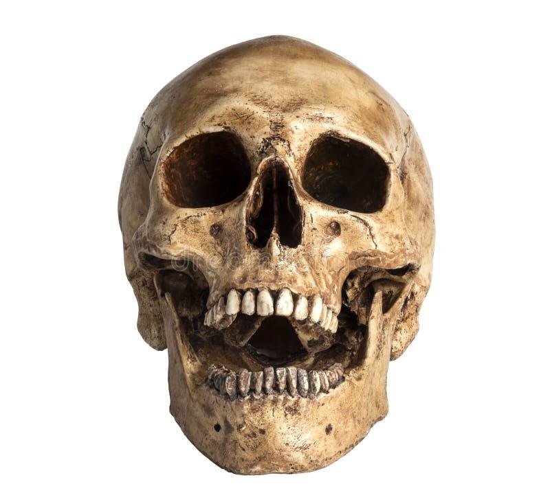 Modelo del cráneo fotos de archivo