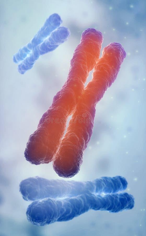 Modelo del filamento de la DNA imágenes de archivo libres de regalías