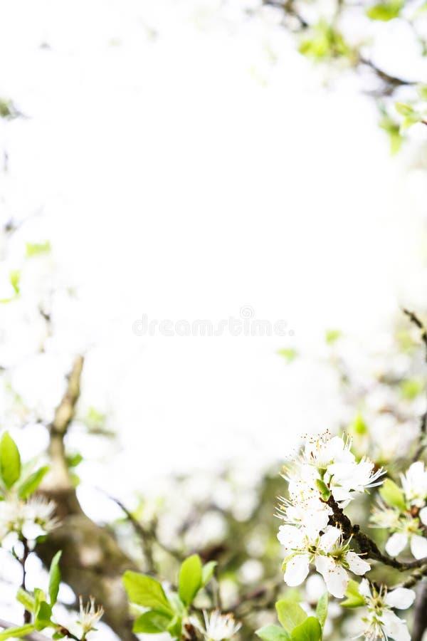 Modelo del flor de la primavera fotos de archivo