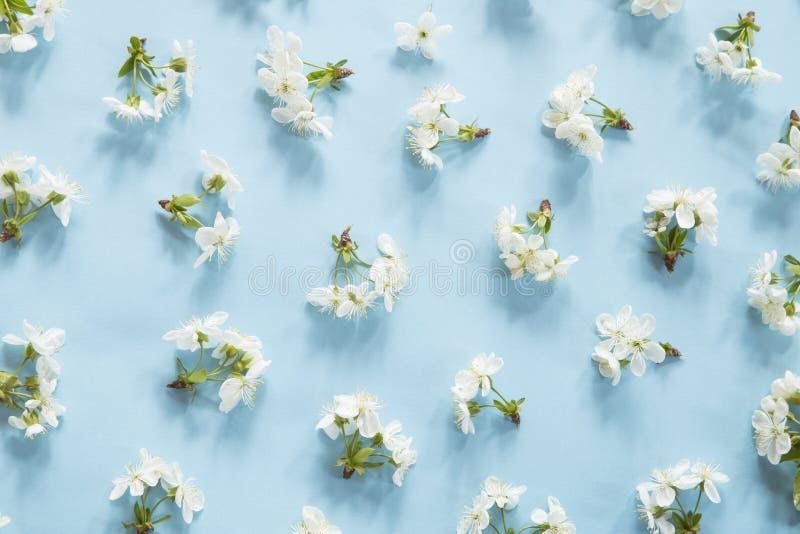Modelo del flor de la primavera imagen de archivo