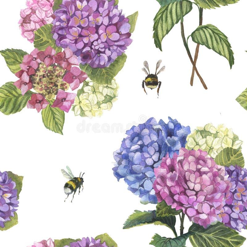 Modelo del hydragenia de la acuarela y rama y abejorros inconsútiles imagen de archivo libre de regalías
