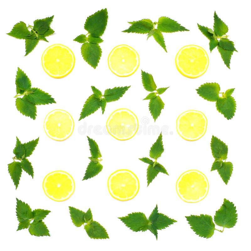 Modelo del limón y de la menta foto de archivo