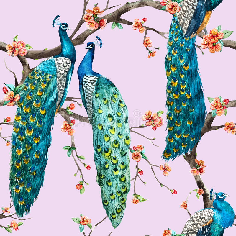 Modelo del pavo real de la trama de la acuarela ilustración del vector