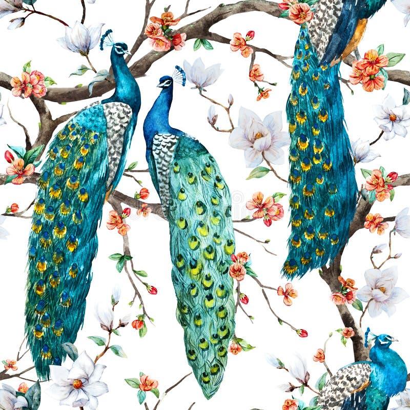 Modelo del pavo real de la trama de la acuarela libre illustration