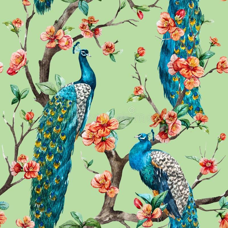 Modelo del pavo real de la trama de la acuarela stock de ilustración