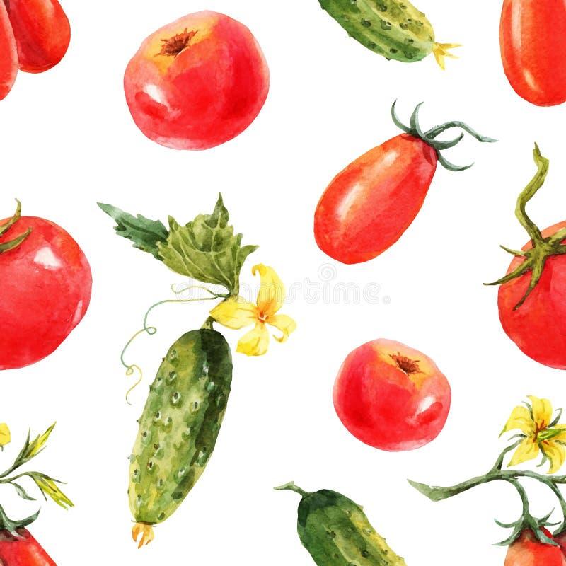 Modelo del tomate y del pepino de la acuarela stock de ilustración