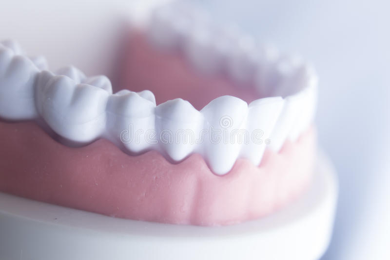 Modelo dental da odontologia dos dentes fotos de stock royalty free