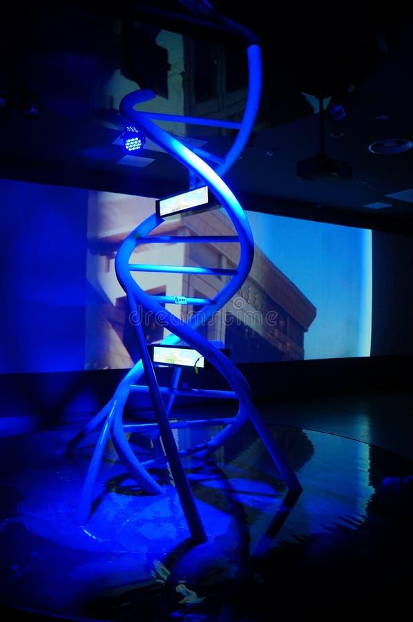 Modelo do ADN fotos de stock royalty free