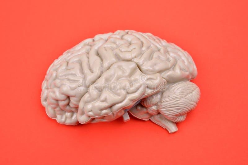 modelo do cérebro 3D humano de externo no fundo vermelho fotos de stock royalty free